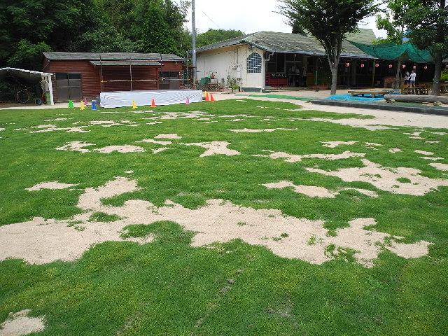 芝生に砂を入れました